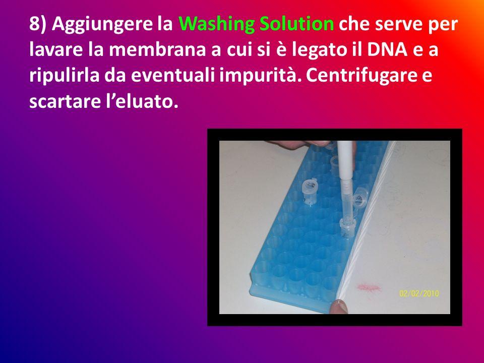 8) Aggiungere la Washing Solution che serve per lavare la membrana a cui si è legato il DNA e a ripulirla da eventuali impurità. Centrifugare e scarta