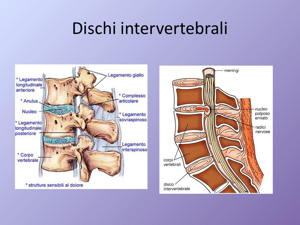 Dischi intervertebrali
