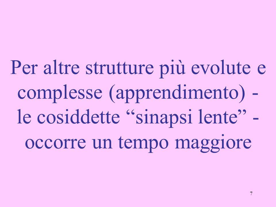 7 Per altre strutture più evolute e complesse (apprendimento) - le cosiddette sinapsi lente - occorre un tempo maggiore
