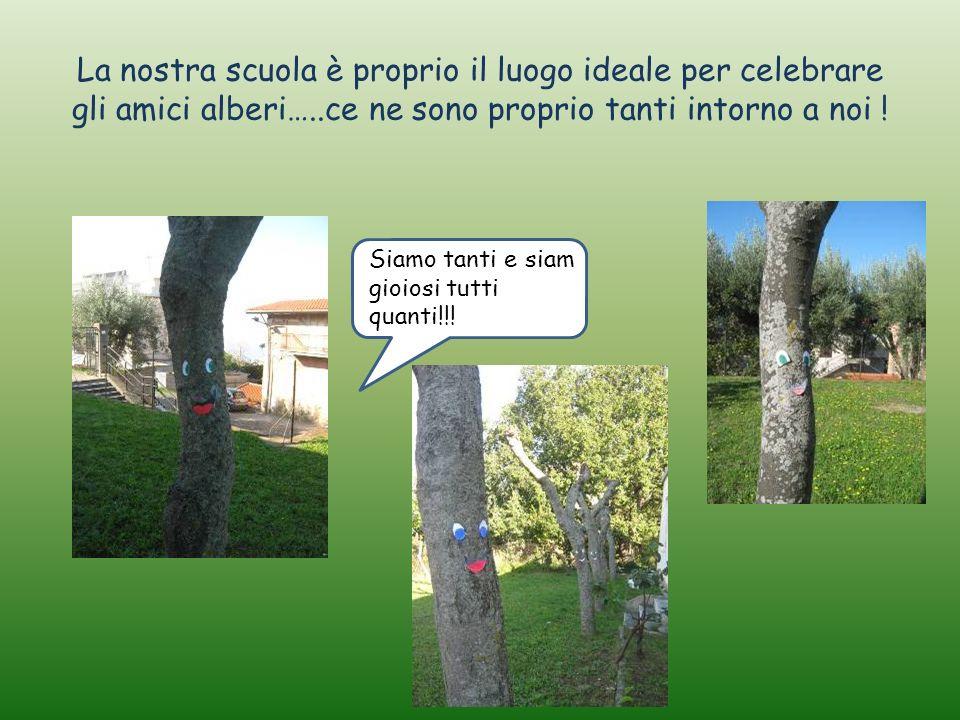 La nostra scuola è proprio il luogo ideale per celebrare gli amici alberi…..ce ne sono proprio tanti intorno a noi ! Sias Siamo tanti e siam gioiosi t