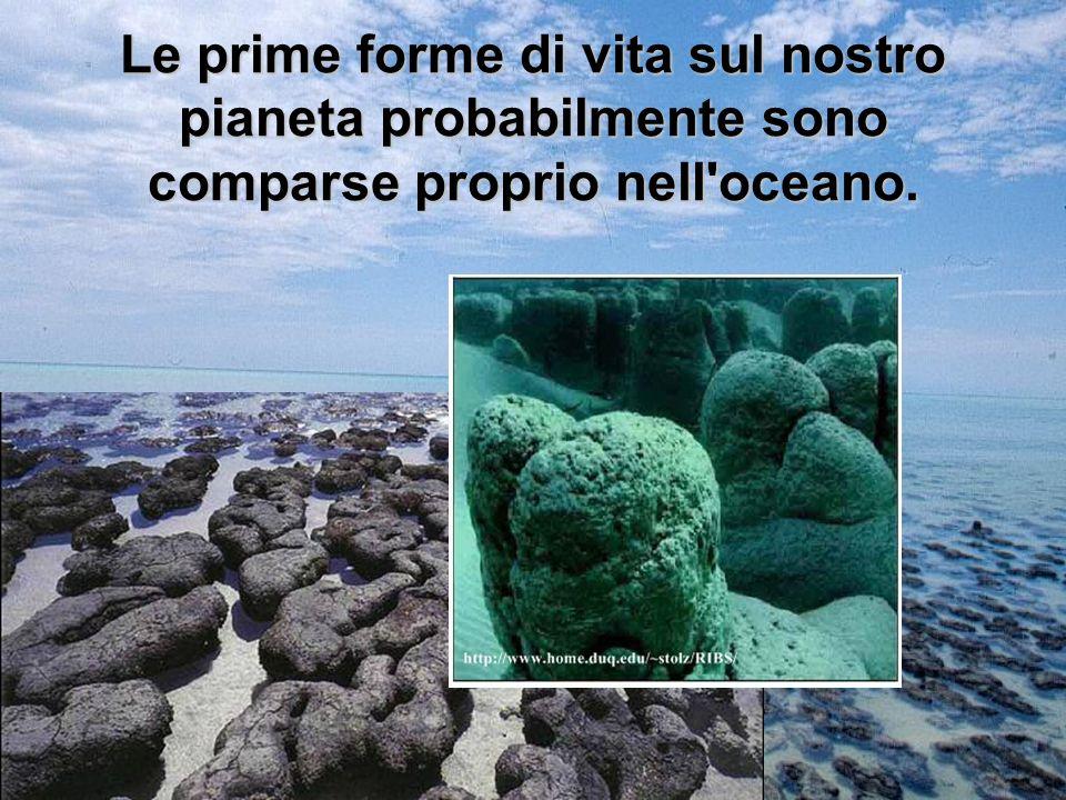 Le prime forme di vita sul nostro pianeta probabilmente sono comparse proprio nell'oceano.