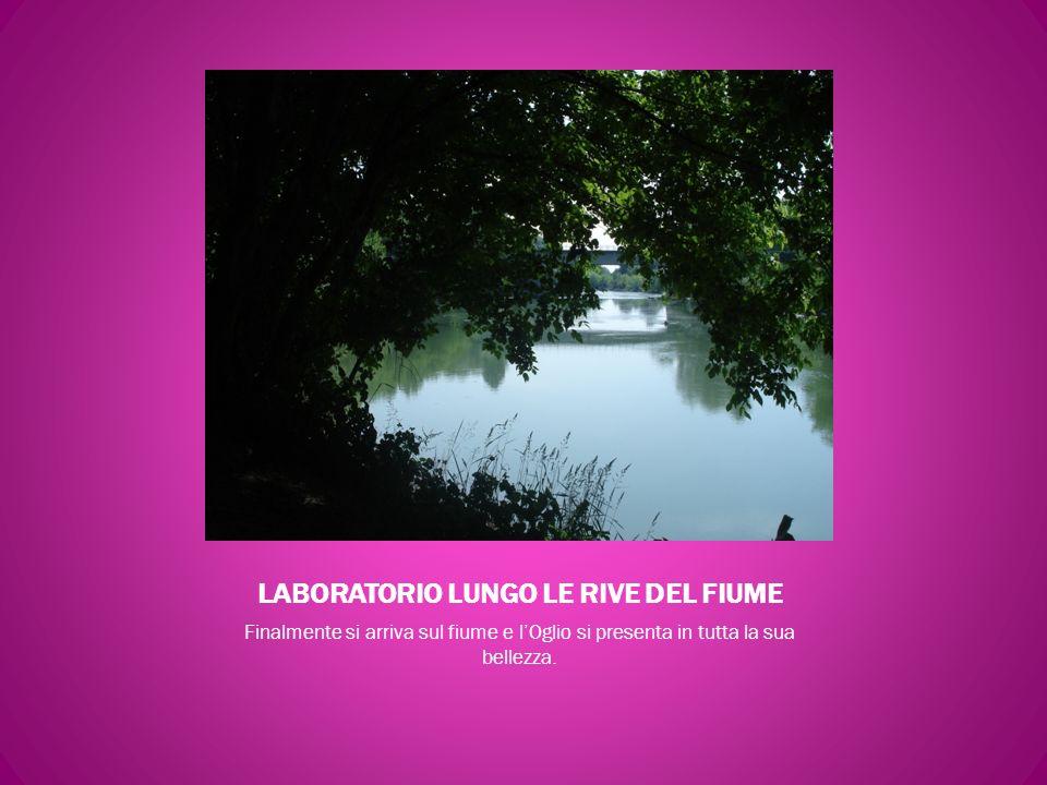 LABORATORIO LUNGO LE RIVE DEL FIUME Finalmente si arriva sul fiume e lOglio si presenta in tutta la sua bellezza.