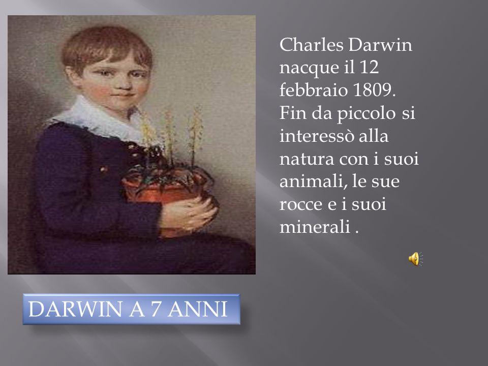 La vita Agostino Bonato, Davide Covallero, Simone Iamundo, Giovanni Pettinà, Giacomo Sasso. Classe 3°D