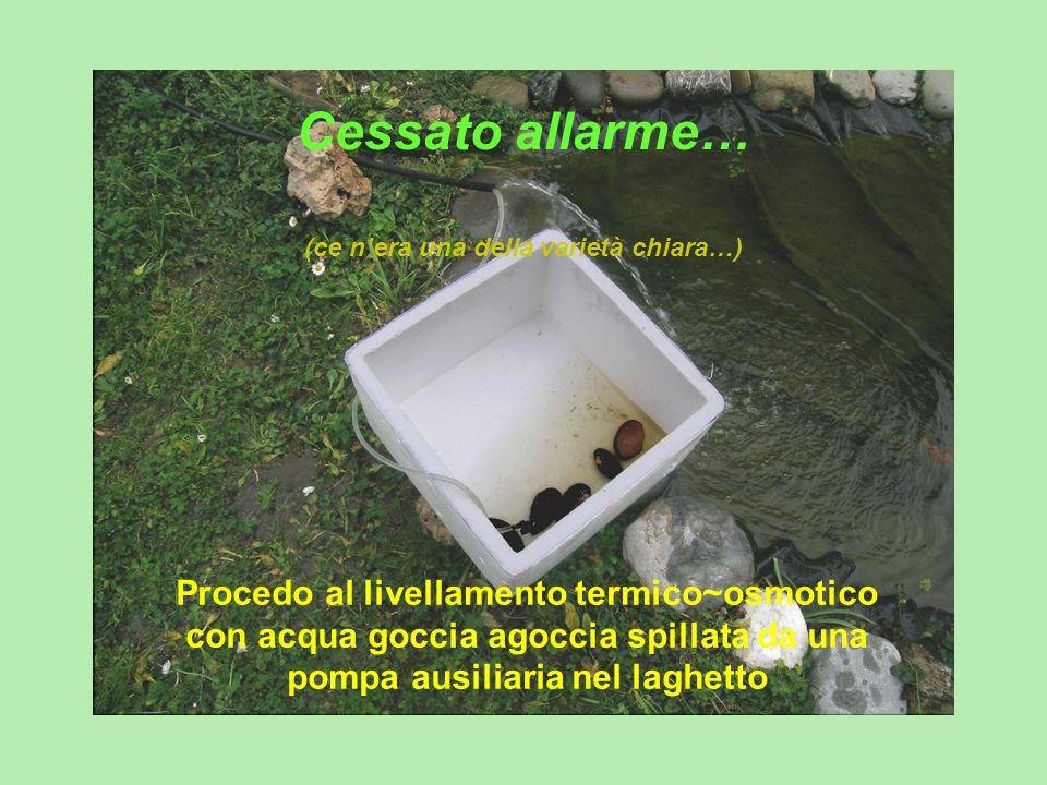 Cessato allarme… (ce nera una della varietà chiara…) Procedo al livellamento termico~osmotico con acqua goccia agoccia spillata da una pompa ausiliari