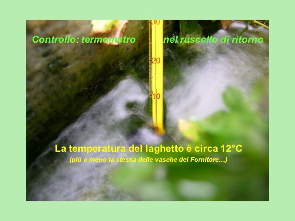 Controllo: termometro nel ruscello di ritorno La temperatura del laghetto è circa 12°C (più o meno la stessa delle vasche del Fornitore…)