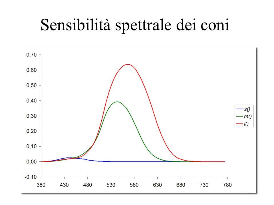 14 La percezione: la retina Le cellule che compongono la retina si suddividono in due categorie: 1.I bastoncelli: sono sensibili ai livelli di luminanza 2.I coni: sono di tre tipi: I.I coni sensibili alle lunghe lunghezze donda (rosso) II.I coni sensibili alle medie lunghezze donda (giallo verde) III.I coni sensibili alle corte lunghezze donda (blu)