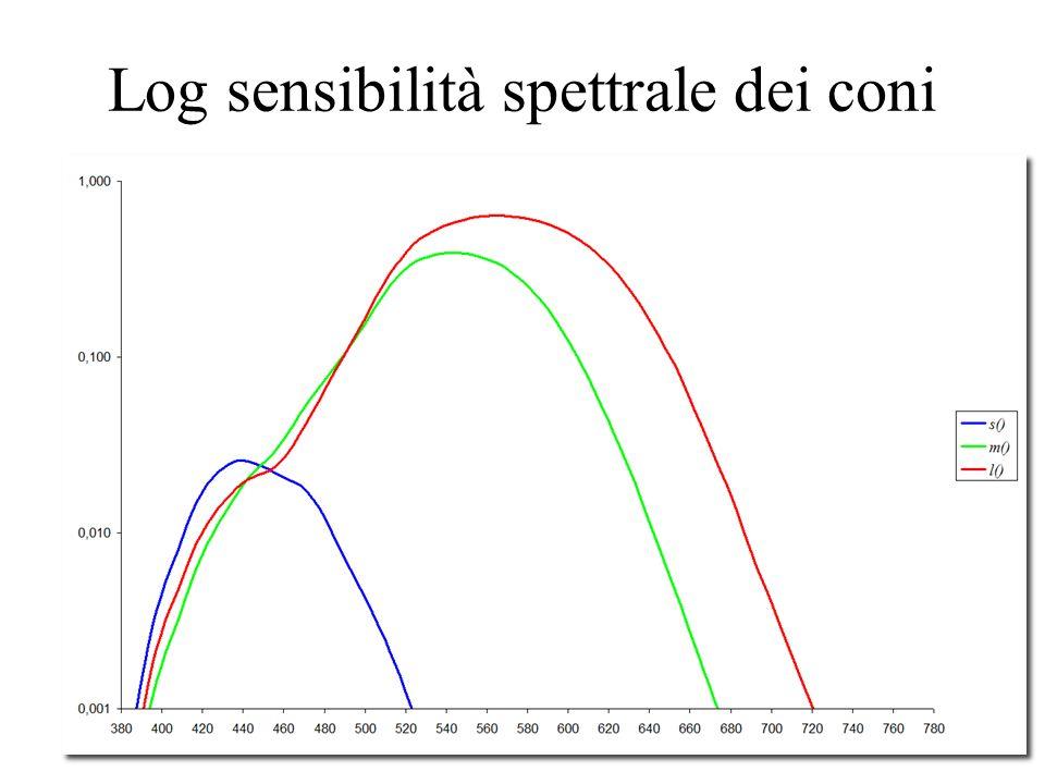 15 Sensibilità spettrale dei coni