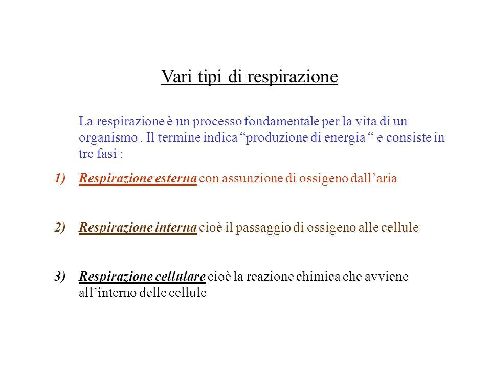 Anatomia dellapparato respiratorio Lapparato respiratorio umano è formato da : 1)Vie aeree superiori 2)Albero bronchiale 3)Polmoni