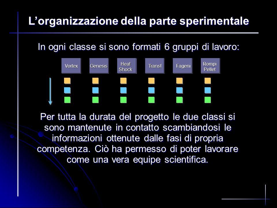 In ogni classe si sono formati 6 gruppi di lavoro: Lorganizzazione della parte sperimentale A Vortex F RompiPellet B Genesis C HeatShock D Transf E Fa