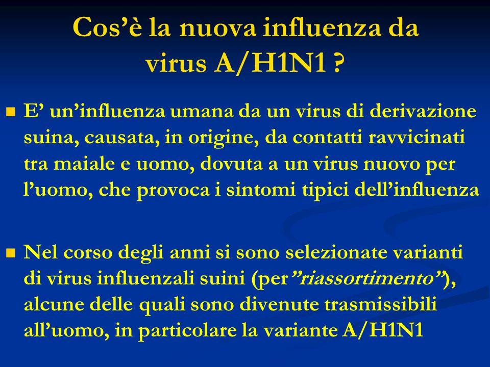 Cosè la nuova influenza da virus A/H1N1 ? E uninfluenza umana da un virus di derivazione suina, causata, in origine, da contatti ravvicinati tra maial