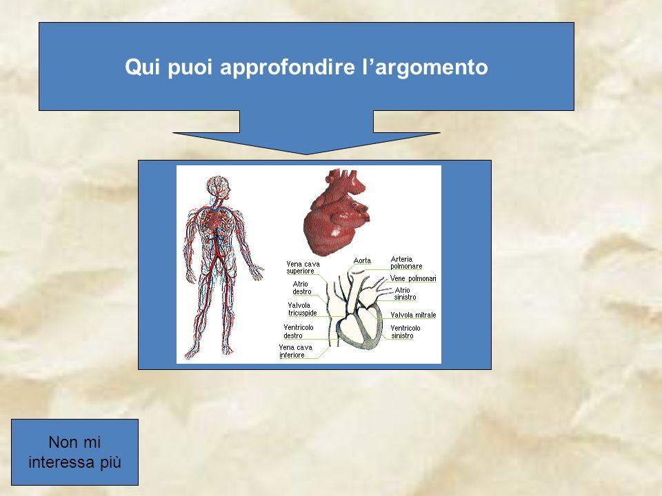 Nella grande circolazione il sangue passa dall atrio destro al ventricolo destro esce dall atrio polmonare e si diffonde nel corpo.