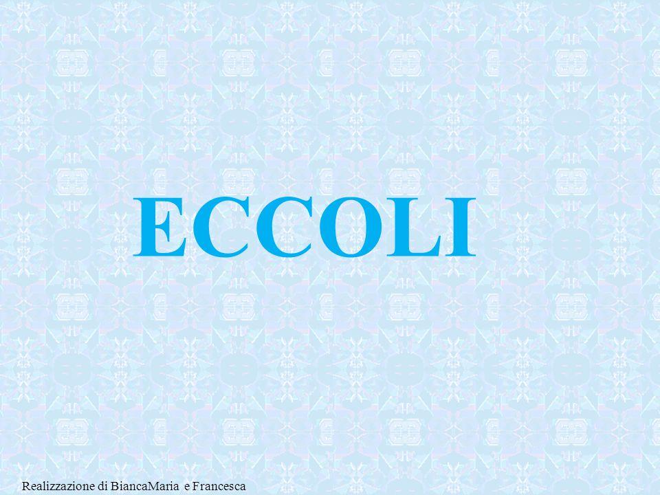 ECCOLI Realizzazione di BiancaMaria e Francesca