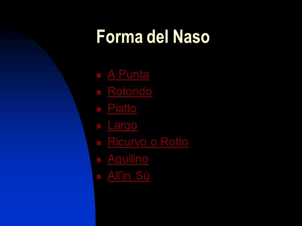 Forma del Naso A Punta Rotondo Piatto Largo Ricurvo o Rotto Aquilino Allin Sù