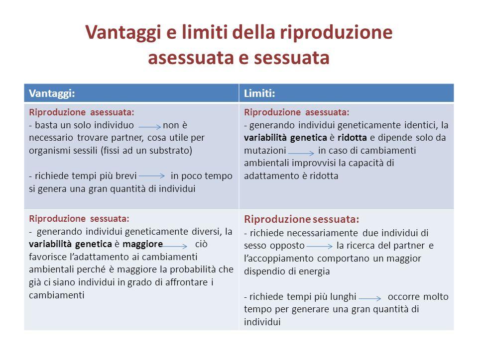 Vantaggi e limiti della riproduzione asessuata e sessuata Vantaggi:Limiti: Riproduzione asessuata: - basta un solo individuo non è necessario trovare