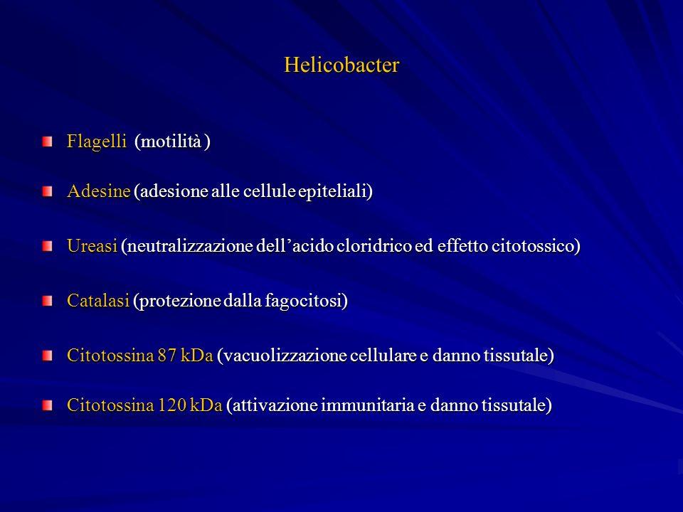 Helicobacter Flagelli (motilità ) Adesine (adesione alle cellule epiteliali) Ureasi (neutralizzazione dellacido cloridrico ed effetto citotossico) Cat