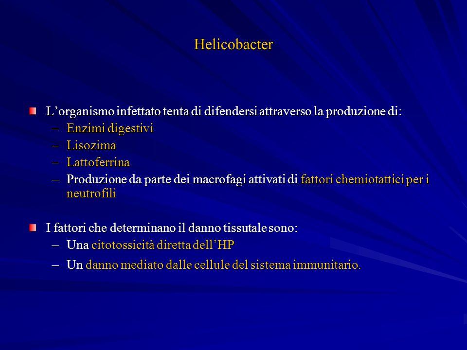 Helicobacter Lorganismo infettato tenta di difendersi attraverso la produzione di: –Enzimi digestivi –Lisozima –Lattoferrina –Produzione da parte dei