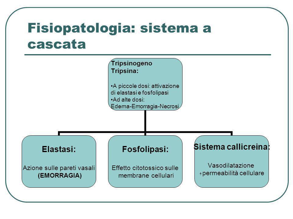 Fisiopatologia: sistema a cascata Tripsinogeno Tripsina: A piccole dosi: attivazione di elastasi e fosfolipasi Ad alte dosi: Edema-Emorragia-Necrosi E