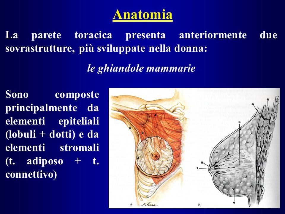 Anatomia La parete toracica presenta anteriormente due sovrastrutture, più sviluppate nella donna: le ghiandole mammarie Sono composte principalmente da elementi epiteliali (lobuli + dotti) e da elementi stromali (t.