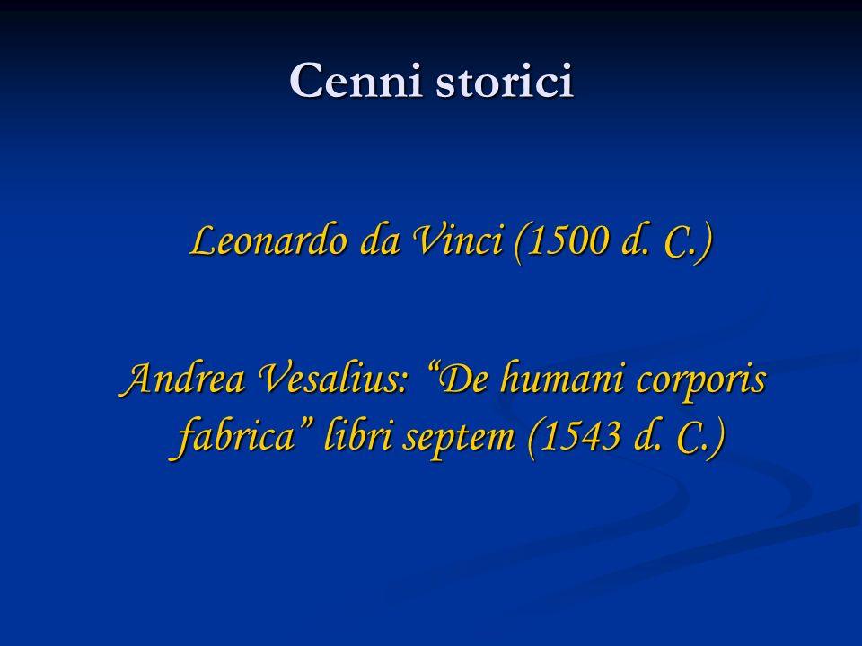 Cenni storici Leonardo da Vinci (1500 d. C.) Leonardo da Vinci (1500 d. C.) Andrea Vesalius: De humani corporis fabrica libri septem (1543 d. C.) Andr