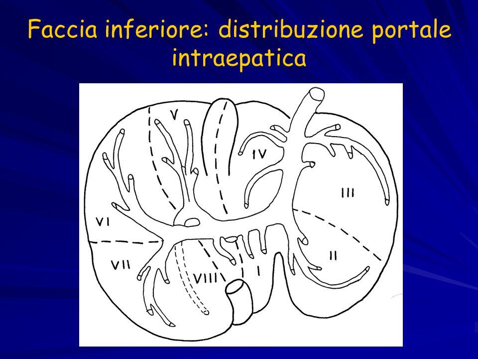 Faccia inferiore: distribuzione portale intraepatica