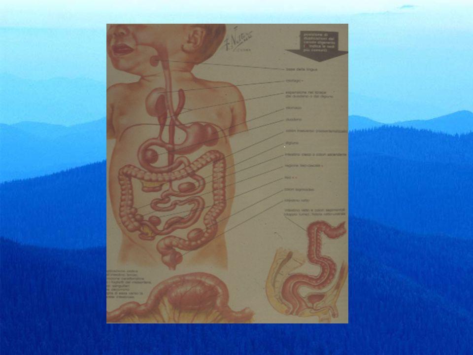 flogosi appendicolare Complicanze PerforazionePerforazione Peritonite focale o diffusaPeritonite focale o diffusa Trombosi venosaTrombosi venosa SetticopiemiaSetticopiemia Ascessi:sottoepatico, retrocolico, retrocecale, endopelvico, mesogastrico.Ascessi:sottoepatico, retrocolico, retrocecale, endopelvico, mesogastrico.