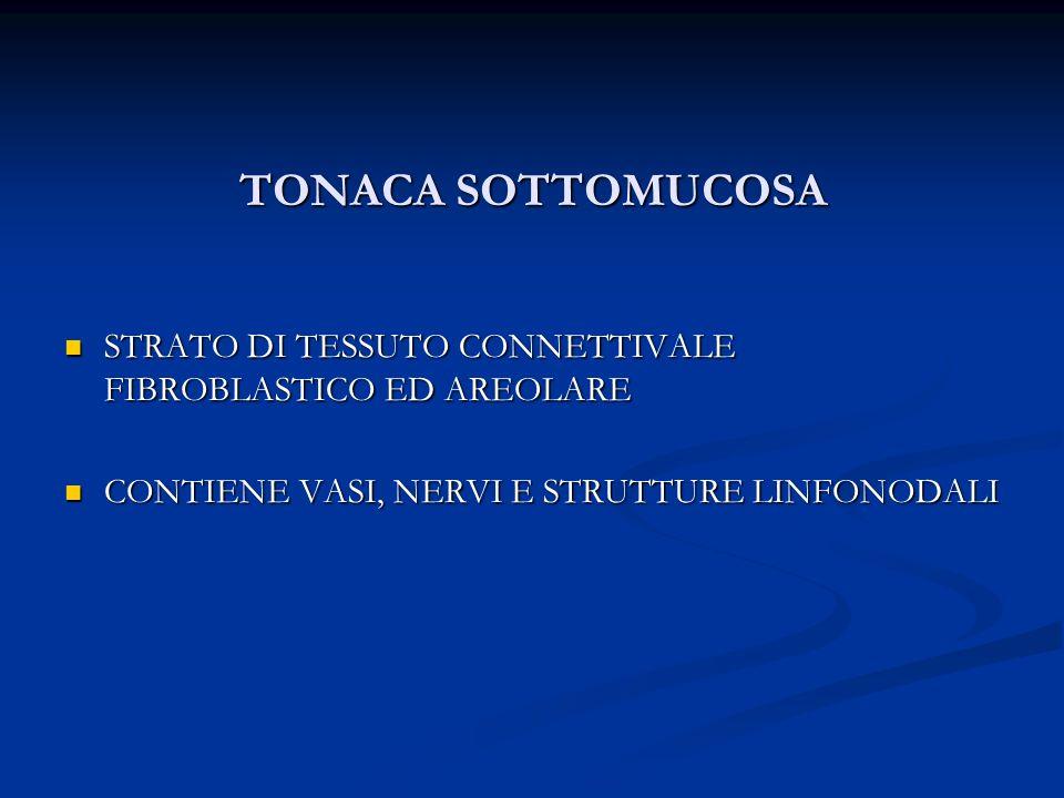 TONACA SOTTOMUCOSA STRATO DI TESSUTO CONNETTIVALE FIBROBLASTICO ED AREOLARE STRATO DI TESSUTO CONNETTIVALE FIBROBLASTICO ED AREOLARE CONTIENE VASI, NE