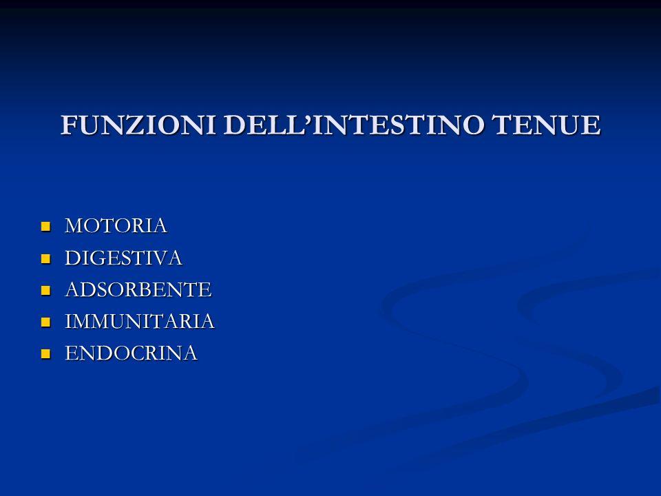 FUNZIONI DELLINTESTINO TENUE MOTORIA MOTORIA DIGESTIVA DIGESTIVA ADSORBENTE ADSORBENTE IMMUNITARIA IMMUNITARIA ENDOCRINA ENDOCRINA