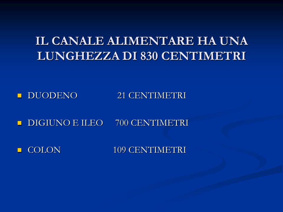 LINTESTINO TENUE SI ESTENDE DAL PILORO AL CIECO, COSTITUITO DA DUODENO (RETROPERITONEALE) DUODENO (RETROPERITONEALE) DIGIUNO E ILEO (TENUE MESENTERIALE) DIGIUNO E ILEO (TENUE MESENTERIALE)