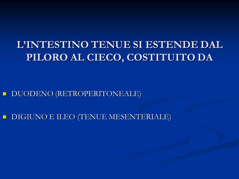 LINTESTINO TENUE SI ESTENDE DAL PILORO AL CIECO, COSTITUITO DA DUODENO (RETROPERITONEALE) DUODENO (RETROPERITONEALE) DIGIUNO E ILEO (TENUE MESENTERIAL
