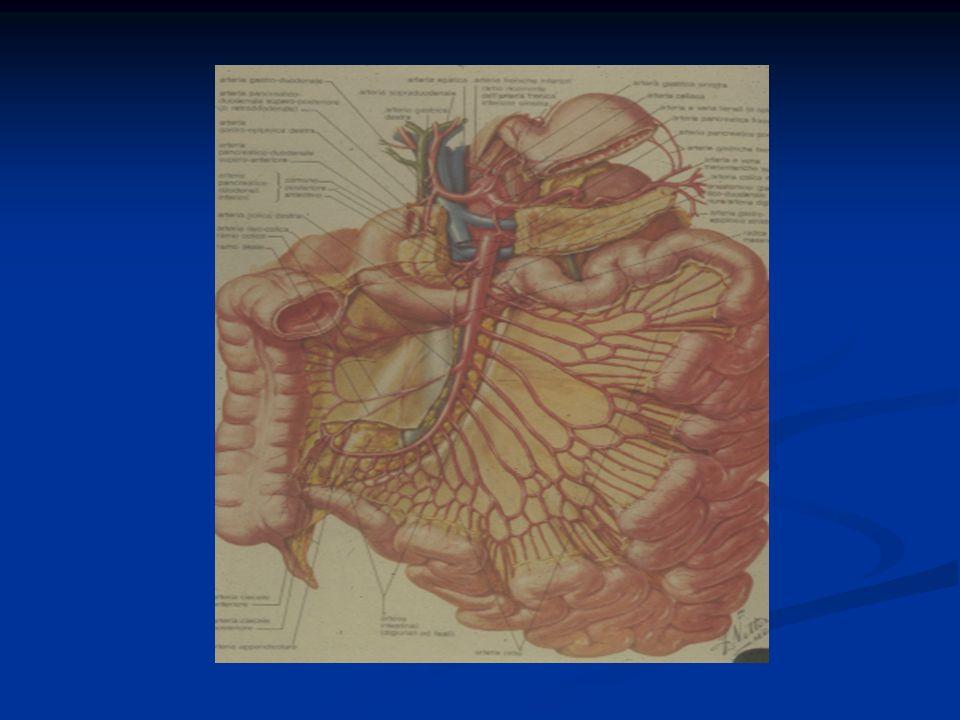 SINTOMATOLOGIA CLINICA ALVO CHIUSO A FECI E GAS O DIARROICO ALVO CHIUSO A FECI E GAS O DIARROICO VOMITO (BILIARE, FECALOIDE) VOMITO (BILIARE, FECALOIDE) DOLORE ADDOMINALE DOLORE ADDOMINALE (INTERMITTENTE NELLOCCLUSIONE PILORICA O DUODENALE, CRAMPIFORME NELLE OCCLUSIONI DEL TENUE, SORDO E PROFONDO IN QUELLE DEL COLON) (INTERMITTENTE NELLOCCLUSIONE PILORICA O DUODENALE, CRAMPIFORME NELLE OCCLUSIONI DEL TENUE, SORDO E PROFONDO IN QUELLE DEL COLON) DISTENSIONE ADDOMINALE DISTENSIONE ADDOMINALE