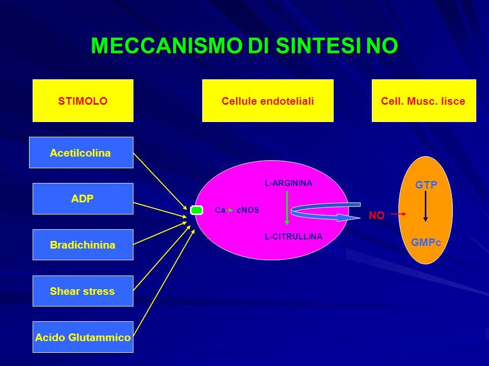 MECCANISMO DI SINTESI NO STIMOLO Acetilcolina ADP Bradichinina Shear stress Acido Glutammico L-ARGININA L-CITRULLINA Ca cNOS Cellule endotelialiCell.