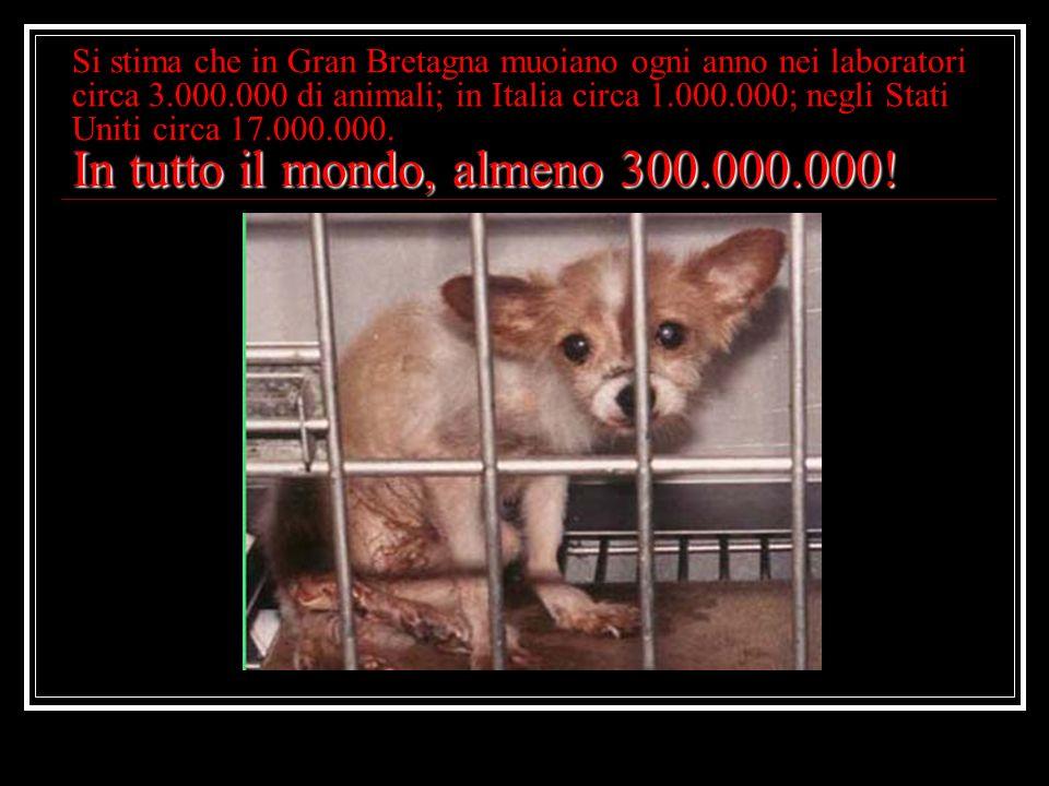 In tutto il mondo, almeno 300.000.000! Si stima che in Gran Bretagna muoiano ogni anno nei laboratori circa 3.000.000 di animali; in Italia circa 1.00
