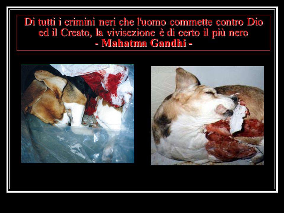 Di tutti i crimini neri che l'uomo commette contro Dio ed il Creato, la vivisezione è di certo il più nero - Mahatma Gandhi -