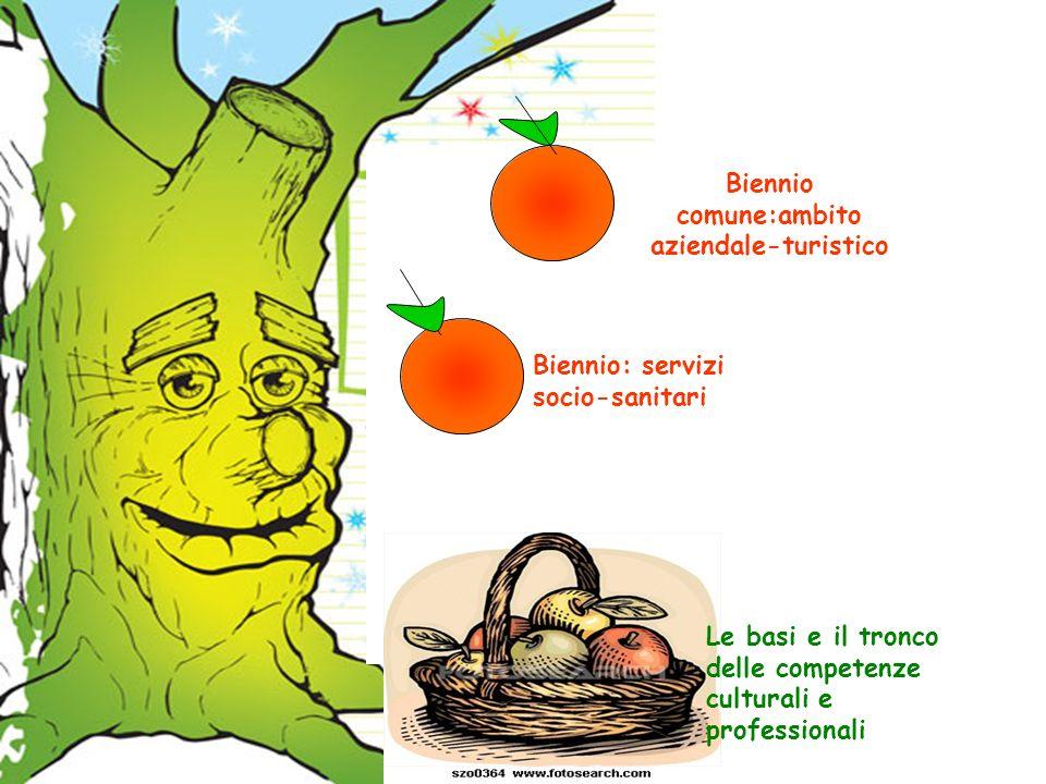 Biennio comune:ambito aziendale-turistico Biennio: servizi socio-sanitari Le basi e il tronco delle competenze culturali e professionali