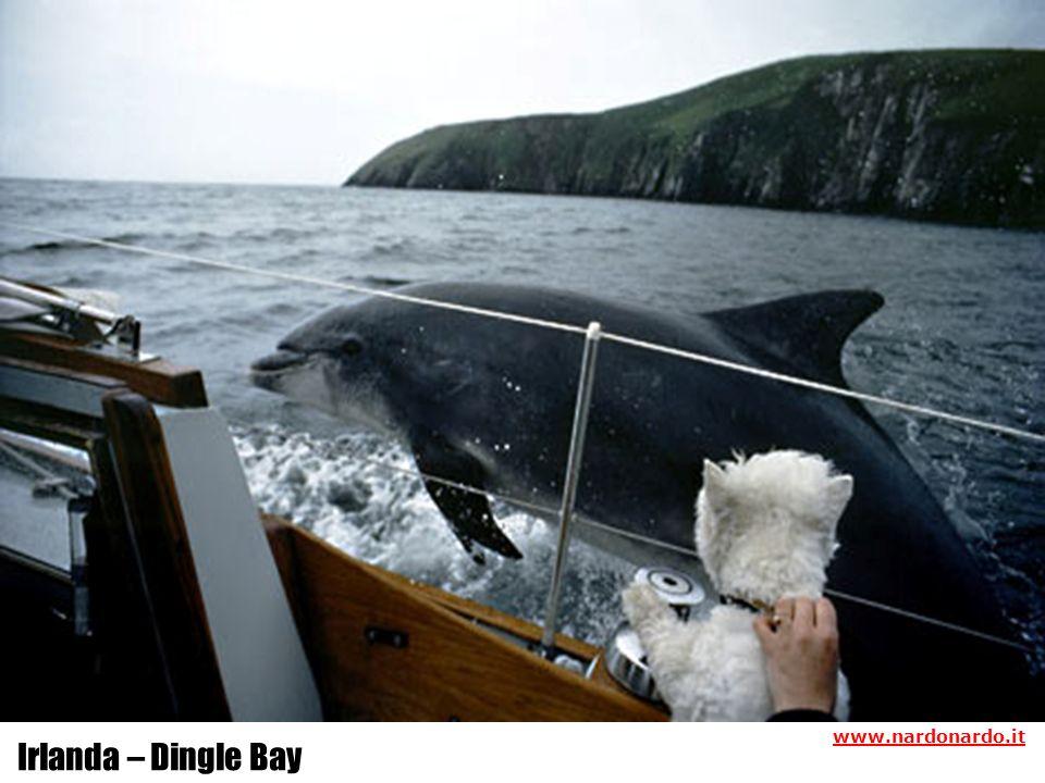 Irlanda – Dingle Bay www.nardonardo.it