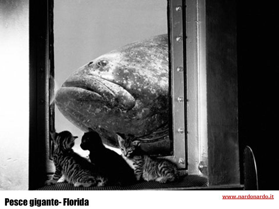 Pesce gigante- Florida www.nardonardo.it