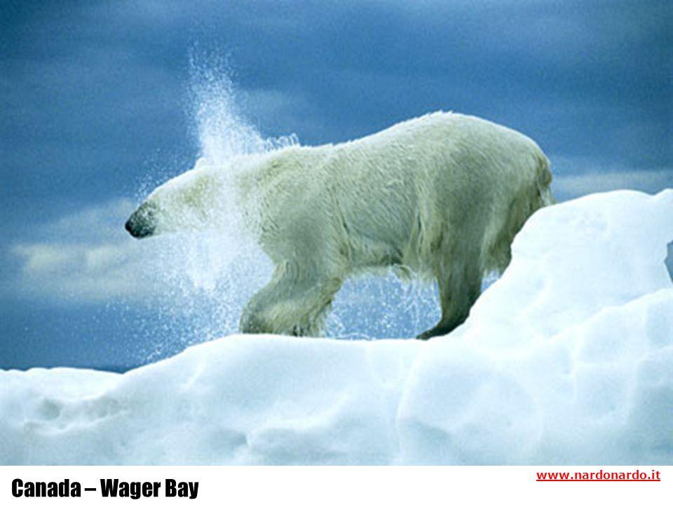 Canada – Wager Bay www.nardonardo.it