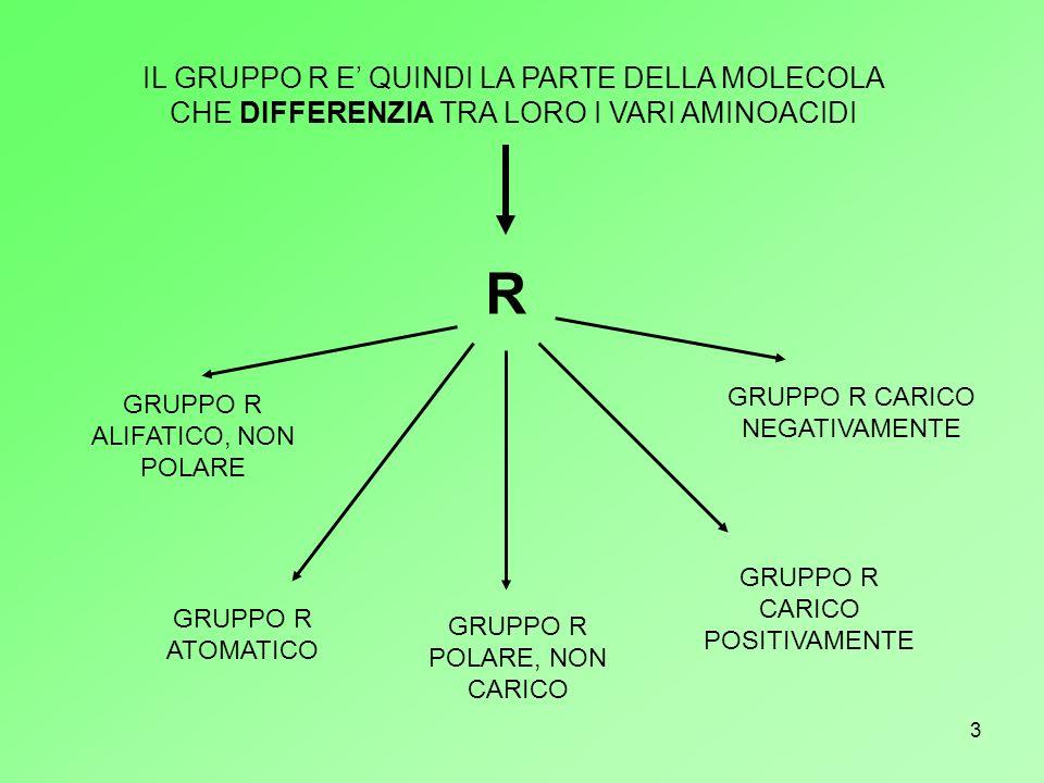 4 R alifatico, non polare R aromatico R polare, non carico R carico negativamente R carico positivamente
