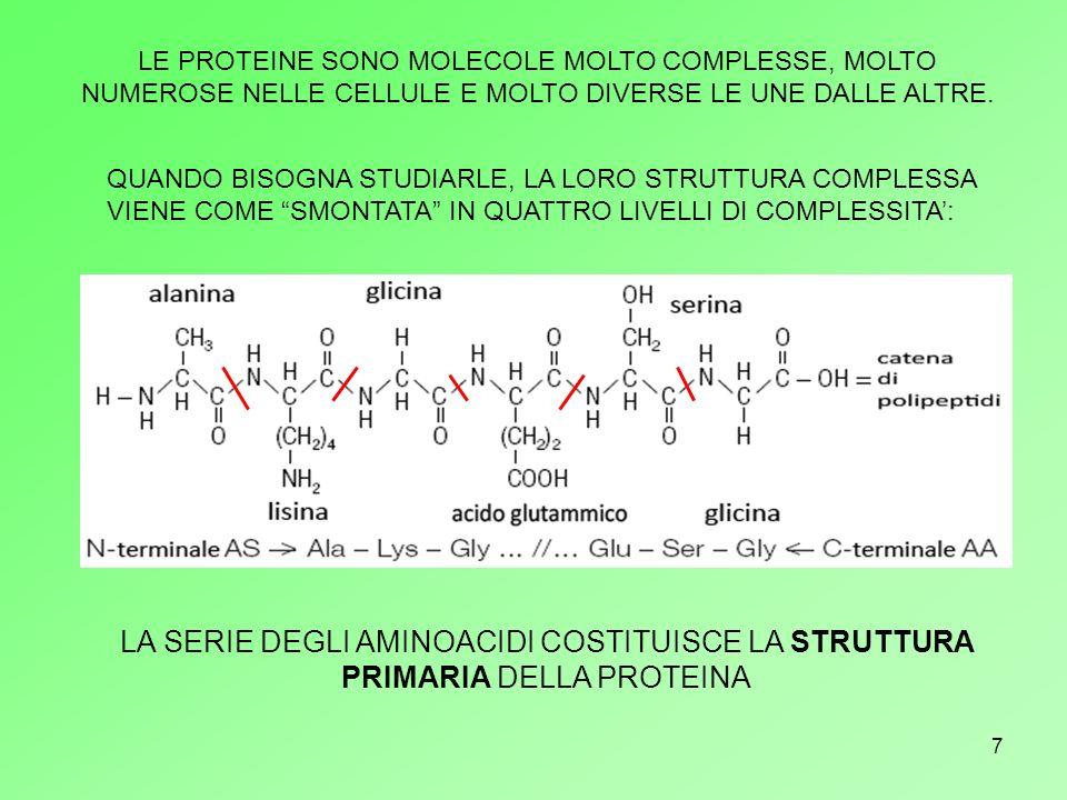 8 α elica β foglietto LE CATENE DI AMINOACIDI SI ORGANIZZANO NELLO SPAZIO IN DUE MODI PRINCIPALI:α ELICA E β FOGLIETTO.