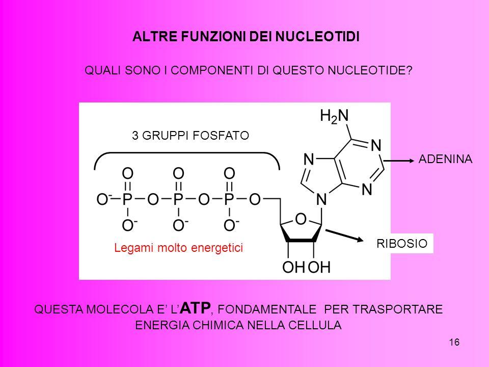 16 ALTRE FUNZIONI DEI NUCLEOTIDI QUALI SONO I COMPONENTI DI QUESTO NUCLEOTIDE? ADENINA RIBOSIO 3 GRUPPI FOSFATO QUESTA MOLECOLA E L ATP, FONDAMENTALE