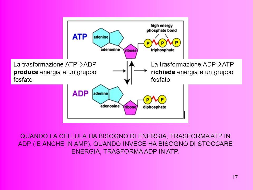 17 La trasformazione ATP ADP produce energia e un gruppo fosfato La trasformazione ADP ATP richiede energia e un gruppo fosfato QUANDO LA CELLULA HA B