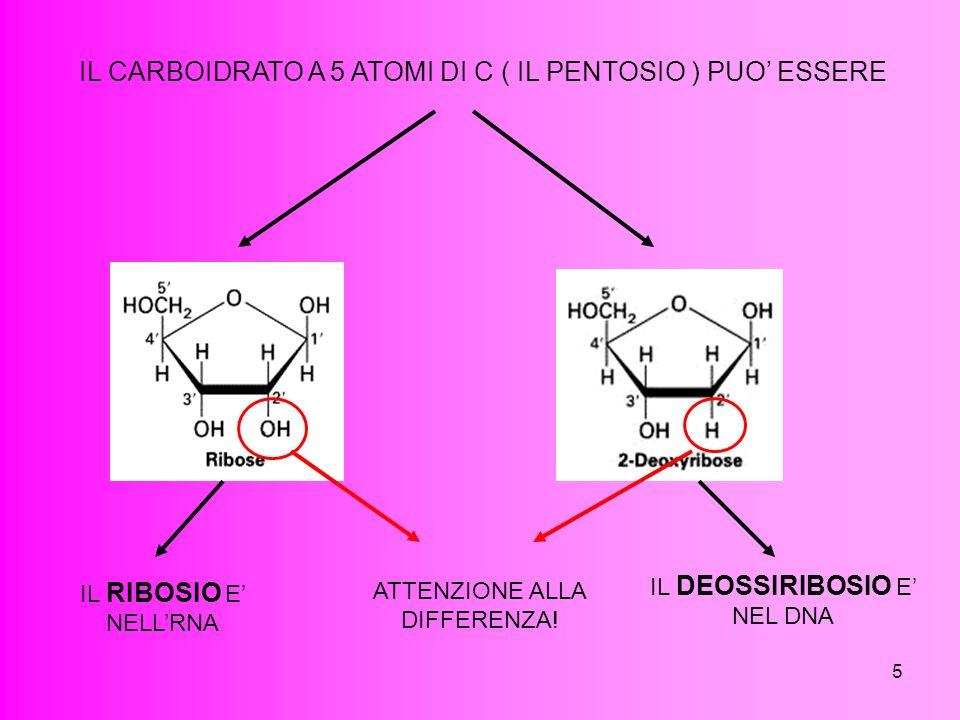 5 IL CARBOIDRATO A 5 ATOMI DI C ( IL PENTOSIO ) PUO ESSERE ATTENZIONE ALLA DIFFERENZA! IL RIBOSIO E NELLRNA IL DEOSSIRIBOSIO E NEL DNA