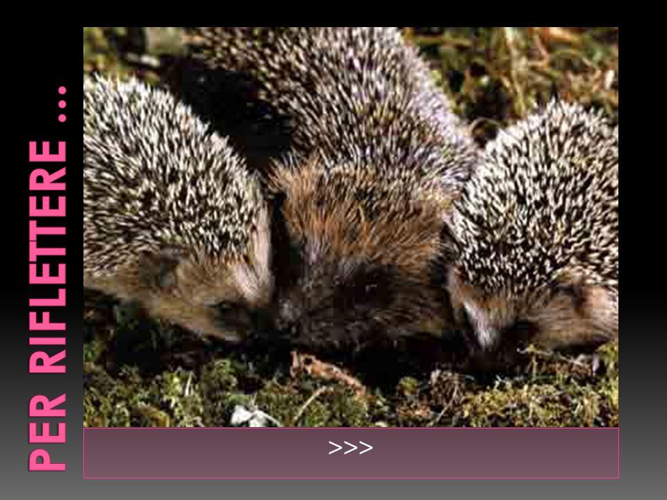 Una compagnia di porcospini, in una fredda giornata dinverno, si strinsero vicini, per proteggersi, col calore reciproco, dal rimanere assiderati.