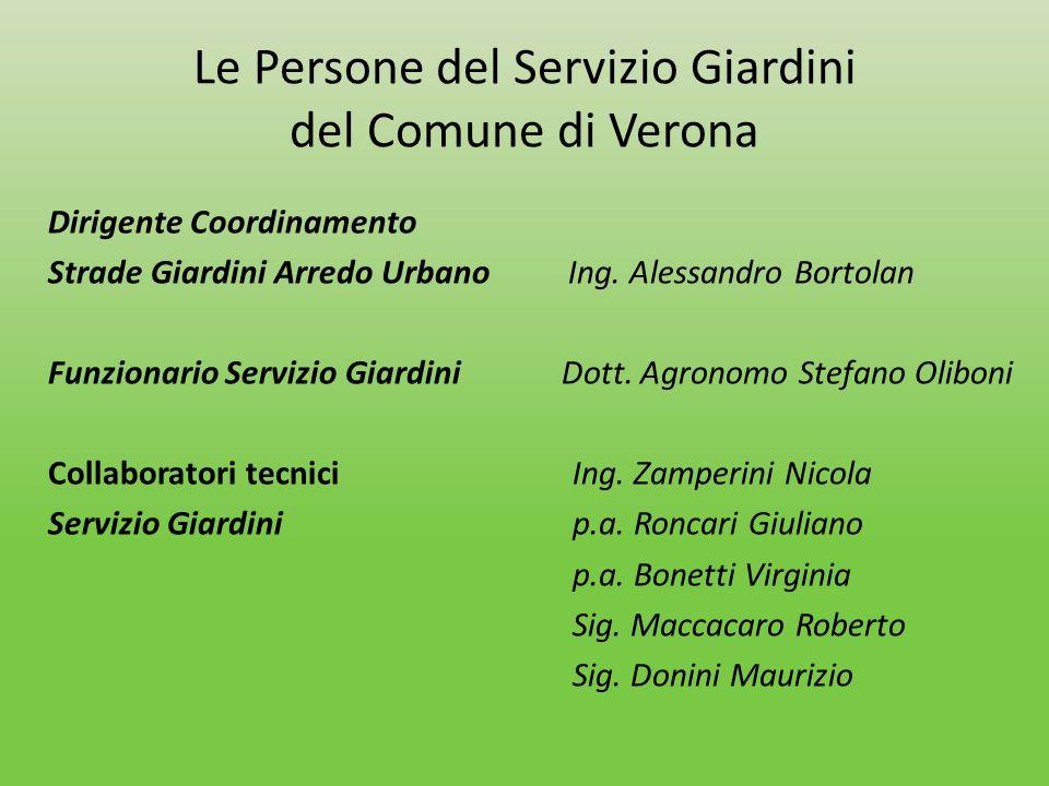Le Persone del Servizio Giardini del Comune di Verona Dirigente Coordinamento Strade Giardini Arredo Urbano Ing. Alessandro Bortolan Funzionario Servi