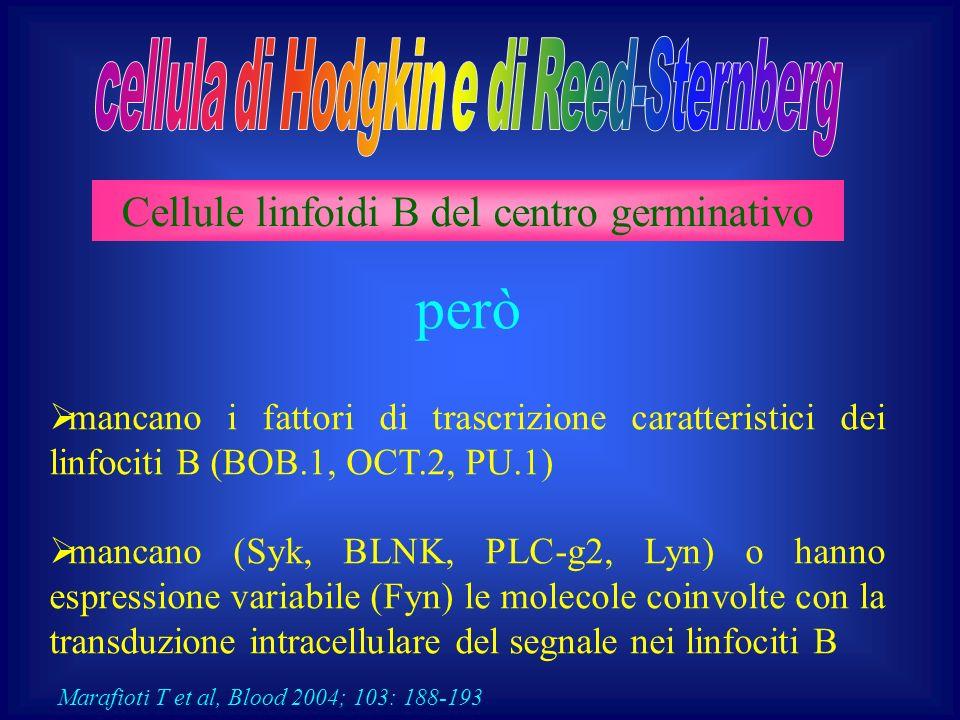 Alta espressività p53 Sovraespressione bcl2 Immunofenotipo CD15- CD20- CD30+ Scarsa risposta al trattamento minore sopravvivenza globale e libera da ricaduta Cattolica, Marzo 2004