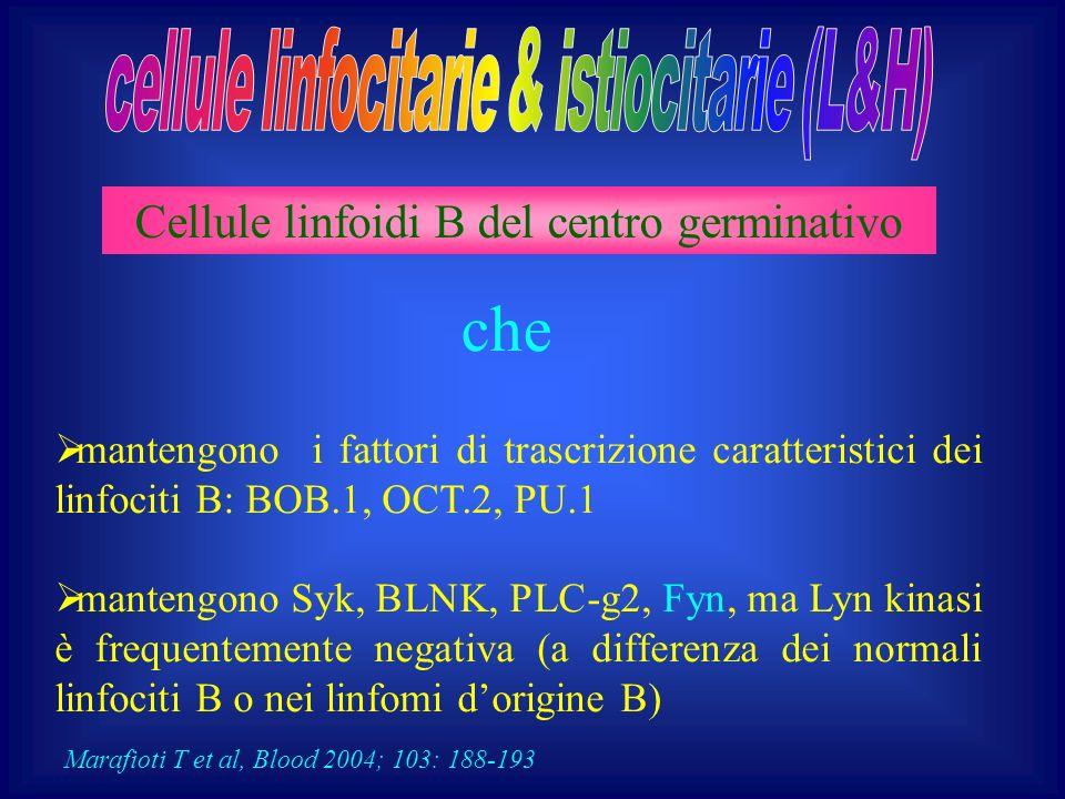 Cellule linfoidi B del centro germinativo mantengono i fattori di trascrizione caratteristici dei linfociti B: BOB.1, OCT.2, PU.1 mantengono Syk, BLNK