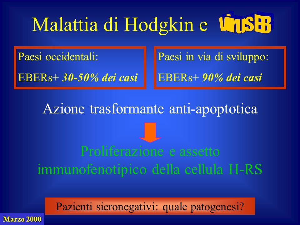 Marzo 2000 Paesi occidentali: EBERs+ 30-50% dei casi Paesi in via di sviluppo: EBERs+ 90% dei casi Malattia di Hodgkin e Azione trasformante anti-apoptotica Pazienti sieronegativi: quale patogenesi.
