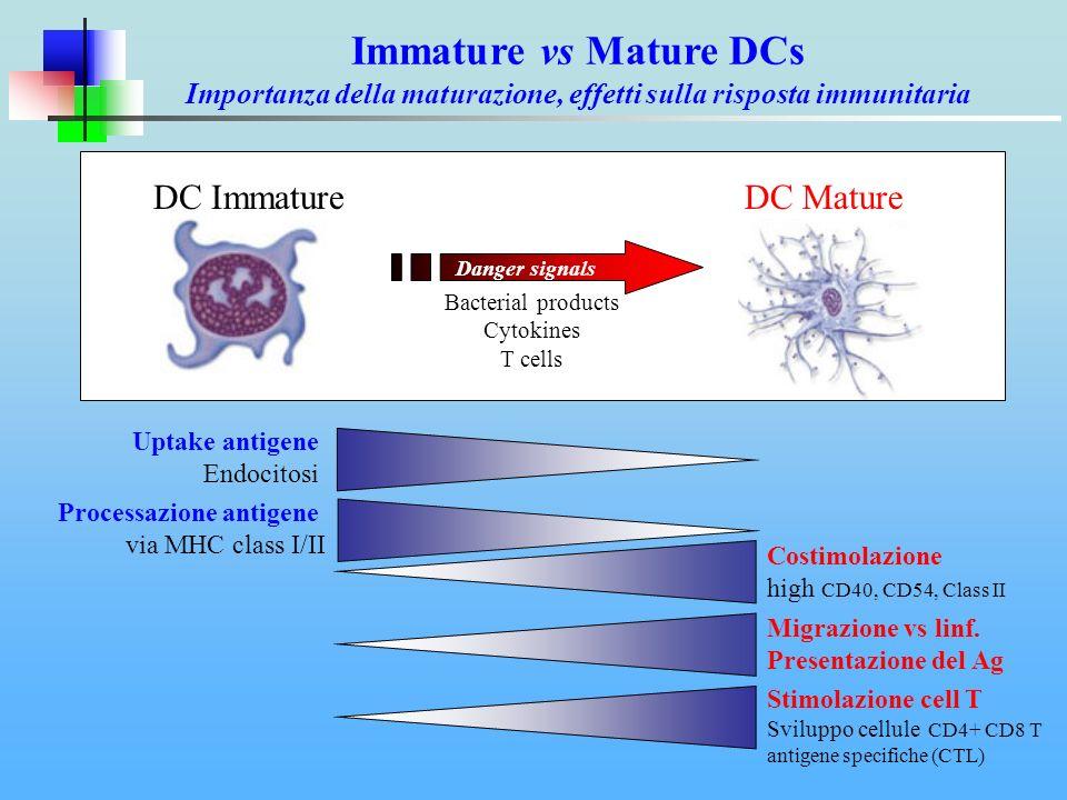 Uptake antigene Endocitosi Migrazione vs linf. Presentazione del Ag Stimolazione cell T Sviluppo cellule CD4+ CD8 T antigene specifiche (CTL) Processa