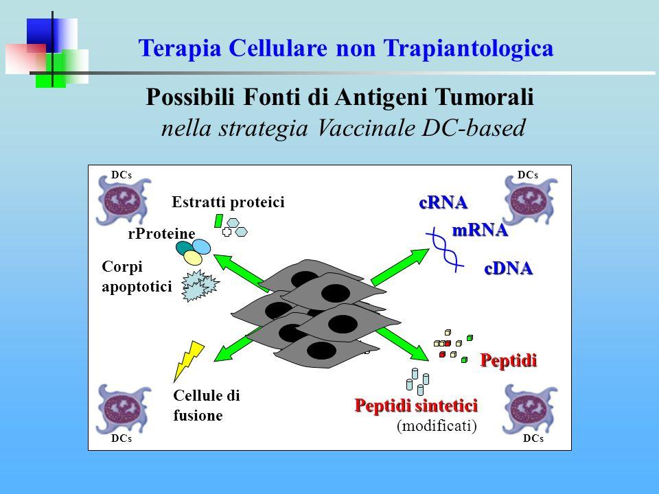 Terapia Cellulare non Trapiantologica Possibili Fonti di Antigeni Tumorali nella strategia Vaccinale DC-based Peptidi sintetici Peptidi sintetici (mod