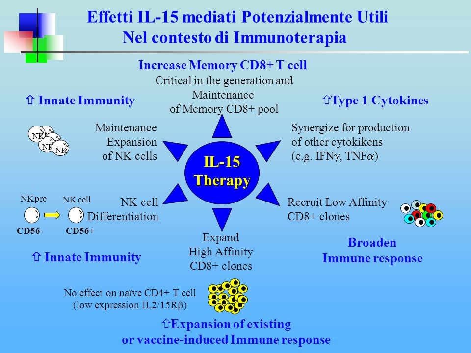 IL-15 Therapy Expand High Affinity CD8+ clones Recruit Low Affinity CD8+ clones Critical in the generation and Maintenance of Memory CD8+ pool No effect on naïve CD4+ T cell (low expression IL2/15R ) Expansion of existing or vaccine-induced Immune response Broaden Immune response Increase Memory CD8+ T cell Maintenance Expansion of NK cells IL-15 Therapy Innate Immunity NK NK cell Differentiation NKpre NK cell Innate Immunity CD56-CD56+ Synergize for production of other cytokikens (e.g.
